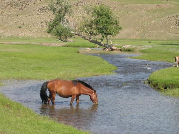horse drinking from stream - (c) travelblog.org